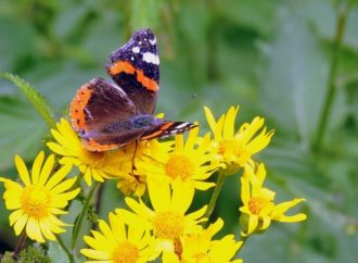 Gli insetti sempre più in via di estinzione