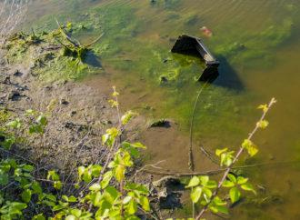 L'inquinamento del torrente Agnena