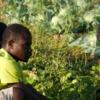 Imparare l'italiano coltivando l'orto
