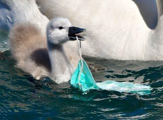 La lotta al Covid frena quella alla plastica